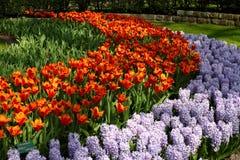 Сады Keukenhof Стоковые Изображения RF