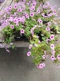 Сады Merrifield Стоковые Фото