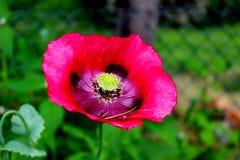 Сады Monet Стоковое Изображение RF