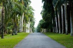 Сады Peradeniya королевские ботанические - Канди - Шри-Ланка Стоковое Изображение