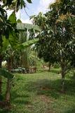 Сад - южный Вьетнам Стоковое фото RF