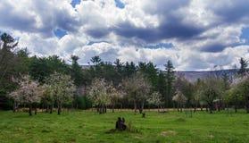 Сад Яблока и персика Стоковое Изображение RF