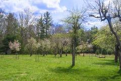 Сад Яблока и персика Стоковые Фото