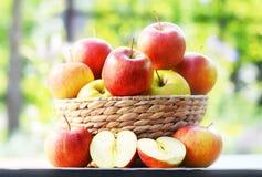 сад яблок органический сбалансированное диетпитание Стоковая Фотография RF