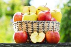 сад яблок органический сбалансированное диетпитание Стоковое Фото