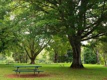 Сад Стоковые Фотографии RF