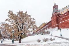 Сад Alexandrovsky в Москве разветвляет зима взгляда вала снежка ели Стоковое фото RF