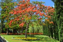 Сад Bahai Израиль Стоковая Фотография
