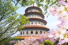 Сад Beautiflu Сакуры с славным небом в Тайбэе, Тайване Стоковые Фотографии RF