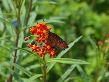 Сад Eco мастерского Gardners Стоковое фото RF