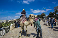 Сад Gethsemane, Иерусалима, Израиля Стоковые Фото