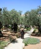 Сад Gethsemane, Иерусалима, Израиля Стоковое Изображение
