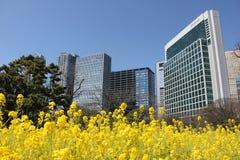 Сад Hamarikyu - токио Стоковое Фото