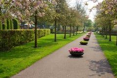 Сад Keukenhof, Нидерланды Стоковая Фотография RF