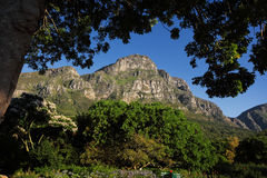 Сад Kirstenbosch ботанический Стоковое фото RF