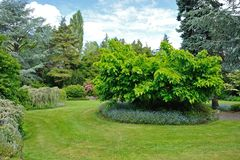 Сад Kubota, Сиэтл Стоковая Фотография RF