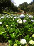 Сад Malang Индонезия Selecta Стоковые Фотографии RF