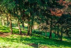 Сад Natsionalny ботанический, m M Государственная академия наук Grishka Украины Стоковая Фотография RF