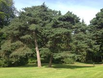 Сад Palanga ботанический Стоковое Изображение RF