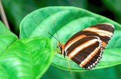 сад s южный Таиланд бабочки Стоковые Фото