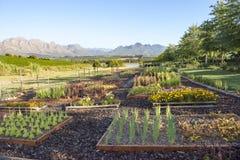 Сад Stellenbosch Стоковое Фото