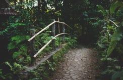 Сад Ubud Бали Стоковые Изображения RF