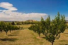 Сад Yarra Глена стоковое фото rf