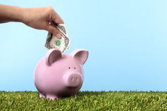 сбережения банка piggy Стоковое фото RF