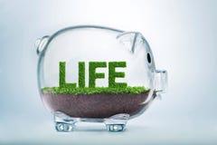 Сбережения роста травы & концепция вклада Стоковая Фотография