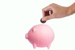 Сбережения свинины Стоковое Фото