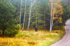 сборник грибков (подборщика гриба) на лесе освобождаясь около дороги леса Стоковое фото RF