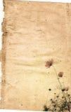 сбор винограда бумаги цветка предпосылки Стоковые Изображения