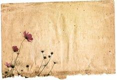 сбор винограда бумаги цветка предпосылки Стоковое Изображение RF