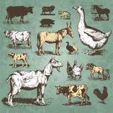 сбор винограда вектора фермы животных установленный Стоковое Изображение