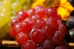 сбор винограда виноградин плодоовощ коробки Стоковая Фотография