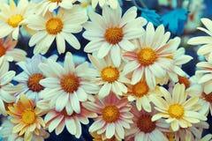 сбор винограда иллюстрации части цветка предпосылки Стоковые Изображения