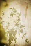 сбор винограда карточки букета bridal Стоковые Фото