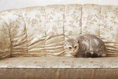 сбор винограда красивейшего кресла кота сидя Стоковое фото RF
