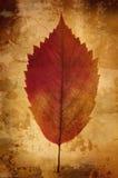 сбор винограда листьев предпосылки Стоковая Фотография