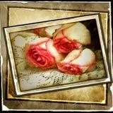 сбор винограда предпосылки розовый Стоковые Изображения