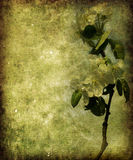 сбор винограда предпосылки флористический бесплатная иллюстрация