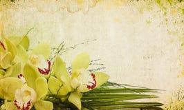 сбор винограда предпосылки Стоковая Фотография