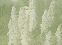 сбор винограда природы предпосылки Стоковая Фотография
