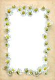 сбор винограда рамки маргариток Стоковые Фотографии RF