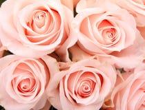 сбор винограда роз предпосылки Стоковые Изображения RF
