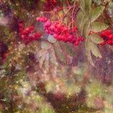 сбор винограда текстуры grunge предпосылки Стоковая Фотография