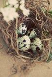 сбор винограда триперсток гнездя яичек Стоковое Изображение