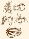 сбор винограда установленный иконами vegetable Иллюстрация вектора