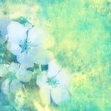 сбор винограда цветка предпосылки Стоковые Фотографии RF