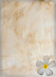сбор винограда цветка старый бумажный Стоковые Фото